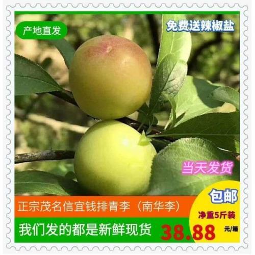 正宗广东茂名信宜钱排青李(南华李)(5斤装包邮)